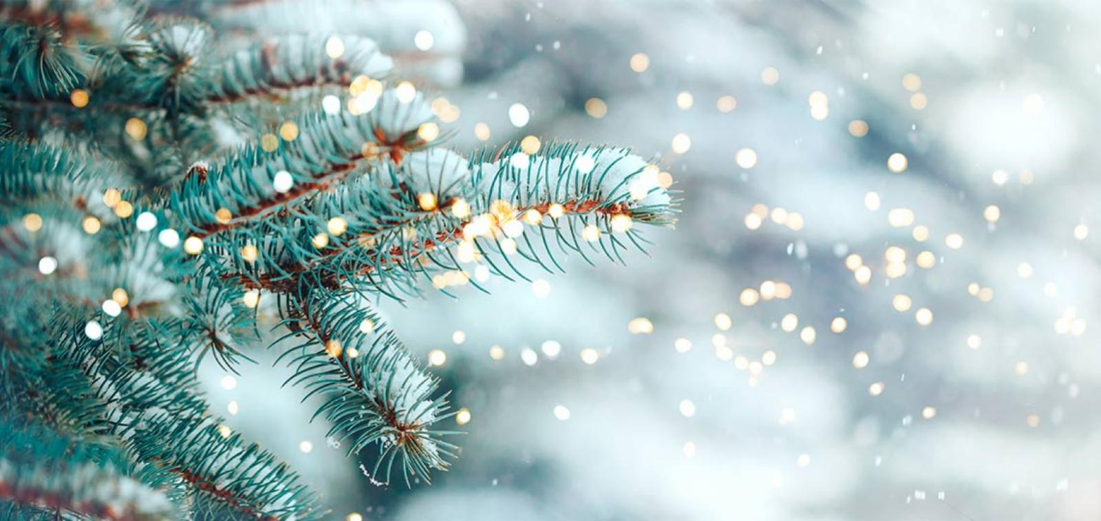 Christmas tree branches covered in snow
