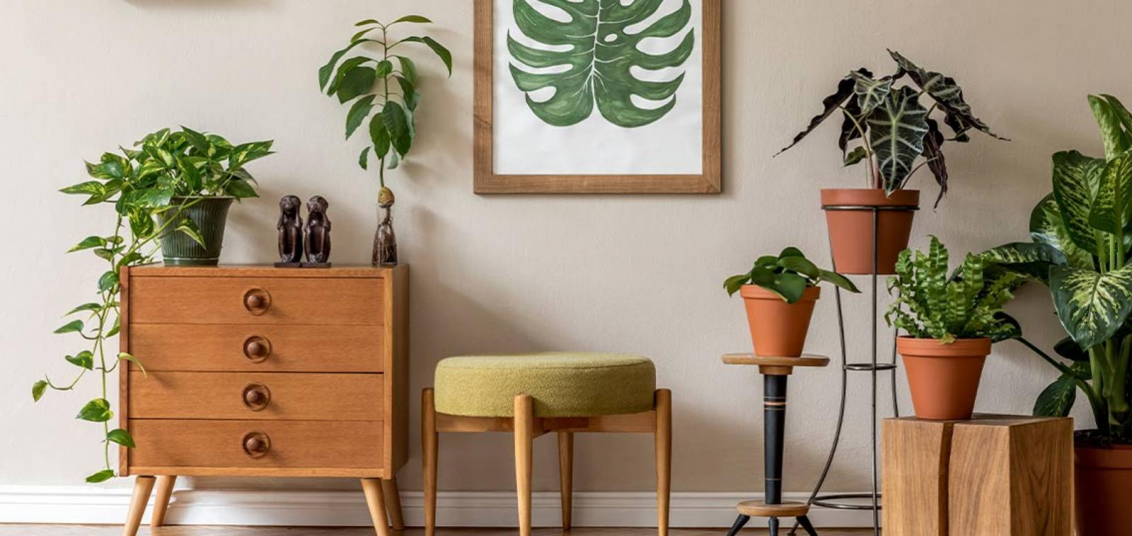 Collection of houseplants