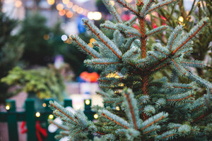Close up of a Christmas tree with other Christmas trees in the background