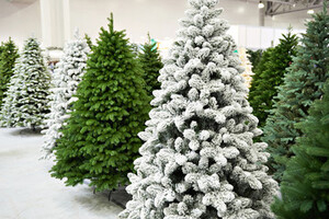 White and green Christmas trees on display