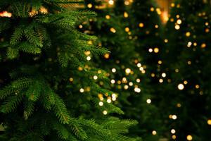 Christmas trees with lights on