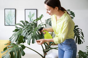Model spraying indoor plants with a water bottle
