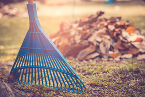 A blue rake with a raked pile of leaves in the background