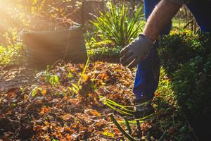 Man gardening using gloves